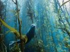 USA (ph. Kyle McBurnie) cute Seal