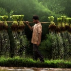 Vietnam farmer (Yothin Insuk)