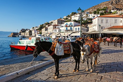 CNF495 Mules are the only means of transportation in Hydra island, Greece